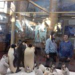 Музей Арктики и Антарктики